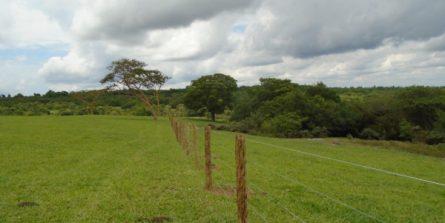 Programa Buriti inicia cadastro de produtores rurais
