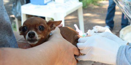 Vacinação Antirrábica na zona urbana começa no próximo sábado (23)